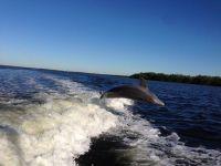 Delphine - vom Boot aus aufgenommen